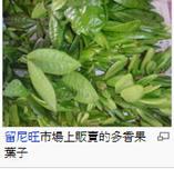 piment , Allspice 牙买加胡椒或多香果