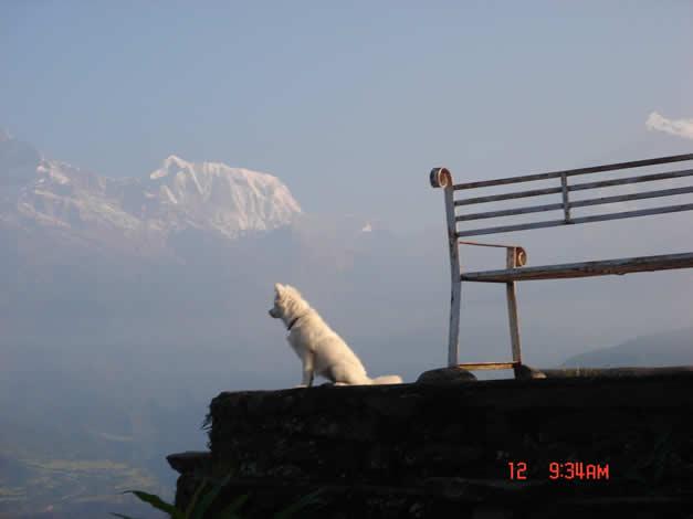 还意外地发现了一条通体纯白的小狼狗,要知道在喜马拉雅山上大部分狗都是粗野丑陋的大草狗,这么纯种的狗还真不容易撞上